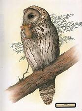 VINTAGE JAPANESE BIRD PRINT ~ URAL OWL ~ STRIX URALENSIS