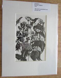 CLARE LEIGHTON. `COLUMBINE ` ORIGINAL 1937 MOUNTED PRINT. WOODCUTS.