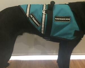 Assistance and Therapy Dogs Vest