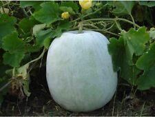 Ash Gourd,White Wax Winter Melon,Benincasa Hispida 10+ Seeds