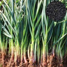 100Pcs Bunching Onion Seeds Nutritious Asian Vegetable Garden Field Decor Spirit