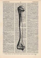 Anatomical Femur Leg Bone Dictionary Art Print, Medical Anatomy Vintage