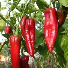 Numex Big Jim riesige Chili mittelscharfe Chilli rote sehr lange Früchte