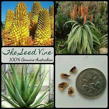 50+ DUNE ALOE SEEDS (Aloe thraskii) Africa Red Flowering Succulent Medicinal