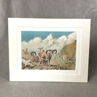 1894 Antico Stampa Animali Bharal Himalayano Blu Pecora Capre 19th Secolo
