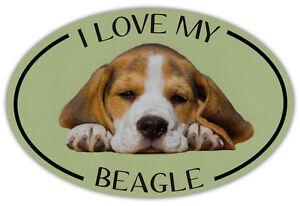 Oval Hund Rasse Bild Auto Magnet - I Love My Beagle - Stoßstangen Aufkleber