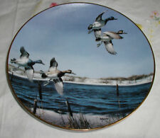 The New Arrivals Plate David Maass On The Wing