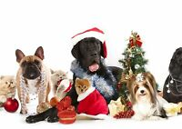 Christmas Dogs & Cats Festive Poster Size A4 / A3 Christmas Poster Gift #8126