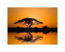 Acacia Tree At Sunrise Art Canvas Print