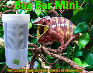 BLINKY CHAMELEON REPTILE LIZARD BUG BAR MINI FEEDER BOWL FOR CRICKETS LOCUST