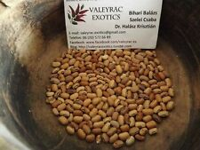 Clay Cowpea 5+ seeds