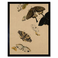 Zeshin Butterflies Japanese Laquer Painting Wall Art Print Framed 12x16