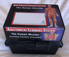 Anatomical Learning System Human Muscles Flash cards