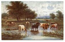 Animals Herd of Cows choose Gué.animals of Cows in the Ford.raphael Tuck