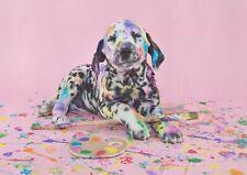 A1 Labrador Dog Colourful Animal Poster Art Print 60 x 90cm 180gsm Gift #15609