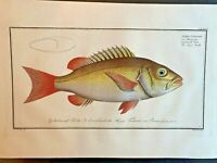 1st EDITION BLOCH OBLONG FOLIO H/C RARE FISH - DOGS TOOTH - #278
