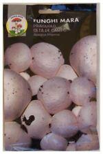 1 Umschlag Samen gr 50 micelio trocken Pilze Wiese