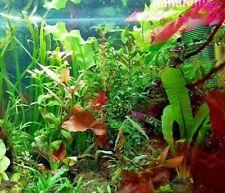 Aquariumpflanzen Set 6 Bunde Aquarienpflanzen Wasserpflanzen XXL SET