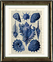 Old Antique Book page Art Print - Blue Seashells - Dictionary Page Wall Art
