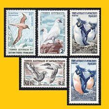 5 OISEAUX TERRES AUSTRALES (TAAF) 1956-1963 NEUFS **