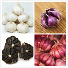 100pcs Black Red Garlic Seeds Organic Vegetables Home Garden Bonsai Planting