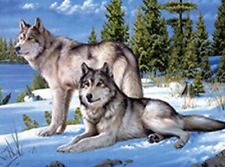WOLF PAIRS - 3D MOVING FLIP PICTURE 400mm x 300mm (NEW) U.K. SELLER