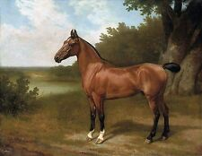 Jacques-Laurent Agasse, Lord Bingley's hunter in a wooded river landscape ART