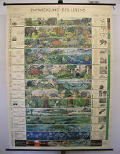 School Wall Picture Nice Old Card development of life 162x225c Vintage Map ~ 1959
