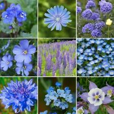 500+ Seeds Singin' The Blues-Exclusive Blue Wildflower Mix 9 Species Usa!