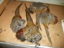 4 NO 2 ringneck pheasant TAILS WITH RUMPS HACKLE feather craft fly tying native