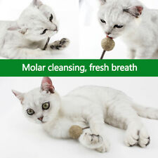 Catnip Chewing Teeth Cleaning Treats Lollipop Natural Catnip Lollipop Sh xhQA