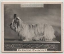 Skye Terrier 1930s Champion  Dog Breed Canine Pet Ad Trade Card