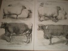 Smithfield Cattle Club show cows and sheep 1866 prints ref C