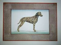Dalmatian Dog Animal Painting Handmade Miniature Floral Border Artwork