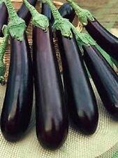 "Long Purple Eggplant *Heirloom* (100 Seed's)  ""FREE SHIPPING"""