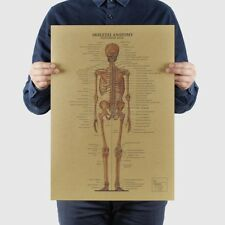 The Human Skeleton Photo Picture Anatomy Skeletal System Human Exquisite UwTXy