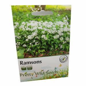 Ramsons Wild Garlic Seeds in Pictorial Packet  'Allium Ursinum'