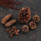 Natural Pine Cones Quality Pinecone Florists Crafts Decorative Christmas Wreath