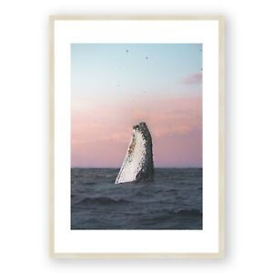 "Tweed Whale in Sunset Framed Print , Wall Art , Australian Photograph , 30x40"""
