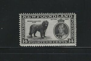NEWFOUNDLAND - #238 - 14c NEWFOUNDLAND DOG MINT STAMP MNH KGVI CORONATION