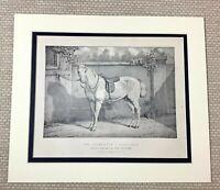 1895 Antico Stampa Roadster Cavallo Piastra Pony Cavalli 19th C Equestrain Art