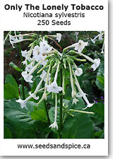Only The Lonely (Nicotiana sylvestris) 1500-2000 Seeds