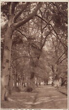 BRENTFORD(London): Gunnersbury park .One of the Avenues-PHOTOCHROM