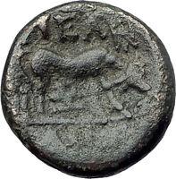 PELLA Macedonia Original 146BC Authentic Ancient Greek Coin ATHENA & BULL i61863
