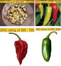 4 in 1 Chilli Seeds !! Value Pack !!