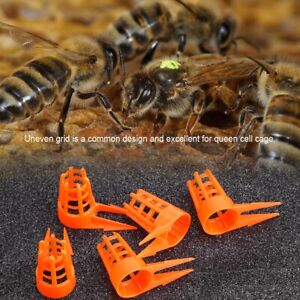 30 Sets Bee Queen Cage Cell Cover Protective Cap for Beekeeper Breeding Tool