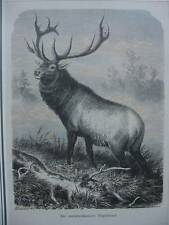 Originaldrucke (1800-1899) aus Nordamerika