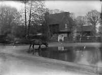 RUISLIP Horse by Cottage Antique Photographic Glass Negative (1910s Middlesex)