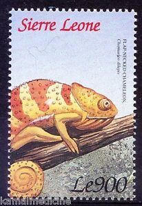 Flap Necked Chameleon, Lizards, Reptiles, Sierra leone 1999 MNH