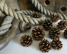 100 NATURAL PINE CONES FLORAL CRAFT DECORATIONS TABLE ART COLLAGE PROJECT